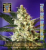 Sweet - Auto Fast Bud - Female 5 Ganja Seeds